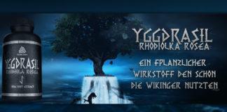 Die Wunderwaffe für jeden Bodybuilder: Yggdrasil Rhodiola Rosea von Gods Rage