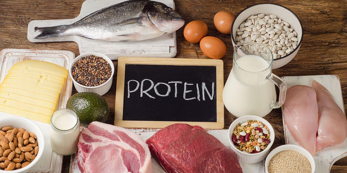Wie Viel Protein Für Muskelaufbau